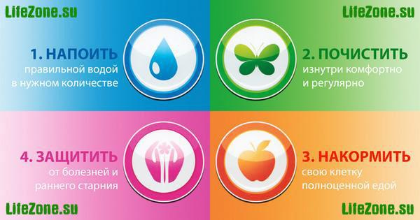 4 шага к здоровью: напоить организм, очистить организм, накормить организм, защитить организм