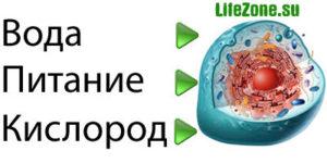 Это нужно клетке для здоровья: вода, питание, кислород