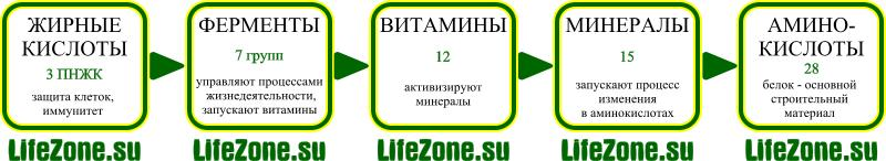 Код клетки человека: 28 аминокислот +15 минералов + 12 витаминов + 7 групп ферментов + 3 ПНЖК (незаменимые жирные кислоты)