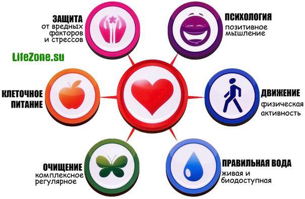 Концепция здоровья. Комплексный системный подход.