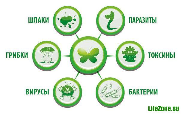 АБВГД и ПП - Агрессия Бактерий, Вирусов, Грибков, Дрожжей и Простейших Паразитов