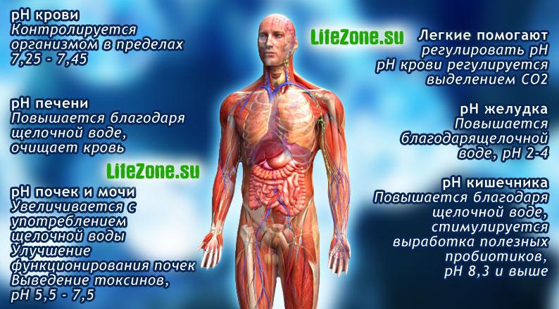 pH показатель внутренних сред организма человека