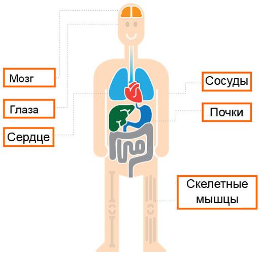 Таурин в организме человека