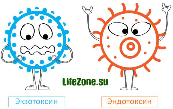 Экзотоксины. Эндотоксины. Детоксикация организма