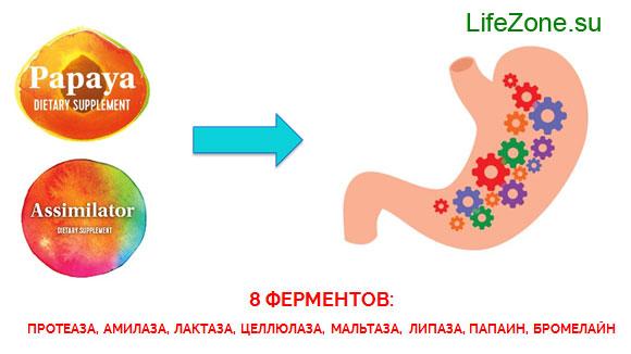 8 пищеварительных ферментов/энзимов