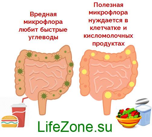 вредная и полезная микрофлора кишечника
