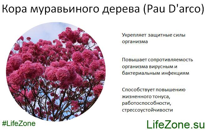 Полезные свойства Коры муравьиного дерева (Pau D'arco)