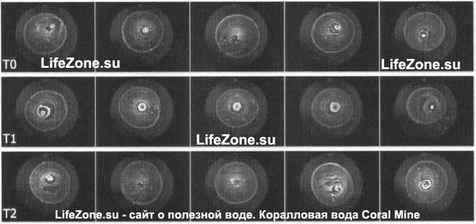 Контрольный кальциевый песок (К-песок) — еуаро-изображения типичных неорганических текстур капли воды перед испытанием (ТО), непосредственно после испытания (Т1), и спустя дополнительные 30 минут после испытания (Т2)