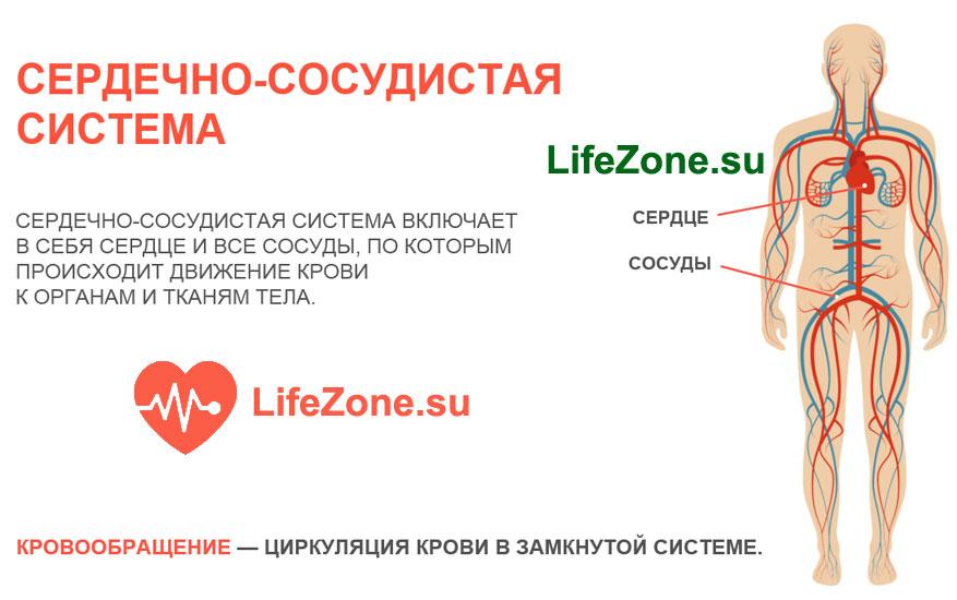 cardiopack здоровье сердечно сосудистой системы